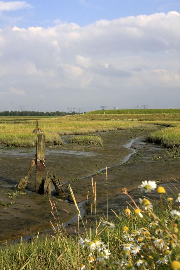 landbouwhaven in Rilland, nu natuurgebied