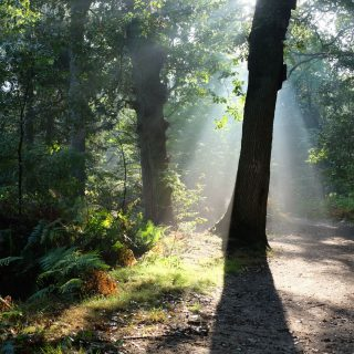 Into the forest – magic
